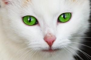 Katze Haustier - Pixabay