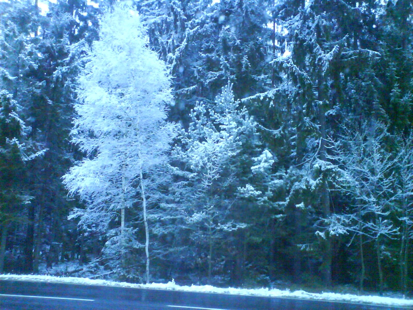 Winterfreuden in der Oberpfalz 2010