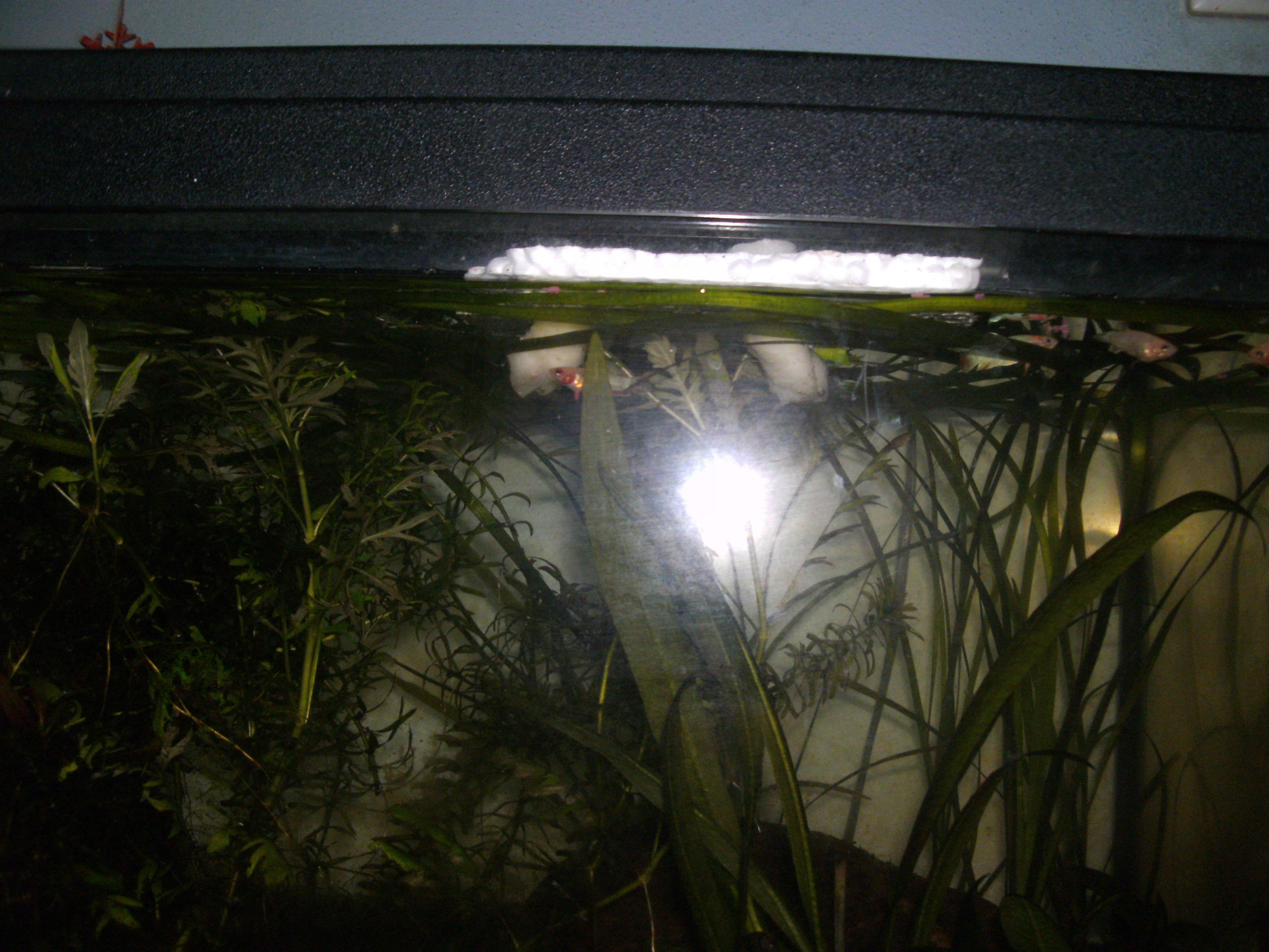 scheiben würmer im aquarium