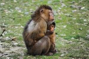 Tiersuche mit Affen - Pixabay