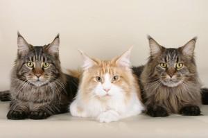 Katzenfamilie - Pixabay